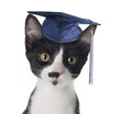 Smart cat wearing a graduation cap.