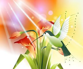 colored humming bird