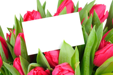 tulips and a card isolated on white background