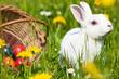 Ostern - Osterhase auf Wiese mit Ostereiern