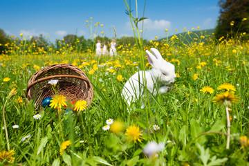 Ostern - Hase auf Wiese, Kinder suchen Eier