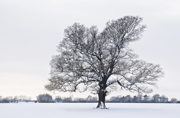 tree in a field of snow