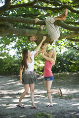 A young man hanging from a tree, two female friends tickling him