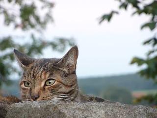 Katze auf Lauer