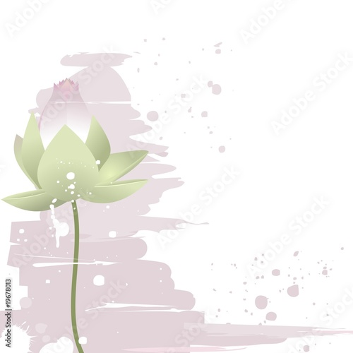 Delicate lotus flower