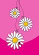 3 Gänseblümchen pink