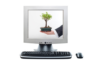 Computer showing bonsai tree