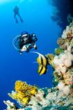 Fototapety Plongeuse et photo sous marine, Mer Rouge, Egypte