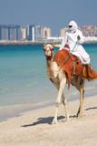 Fototapety Camel on Jumeirah Beach, Dubai
