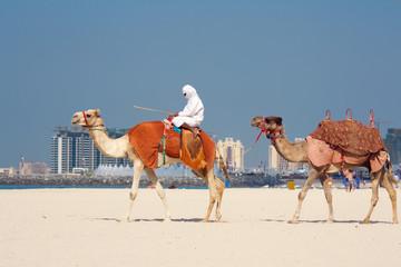 Camels on Jumeirah Beach, Dubai