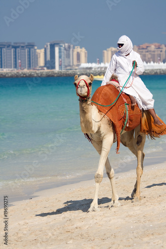 Camel on Jumeirah Beach, Dubai