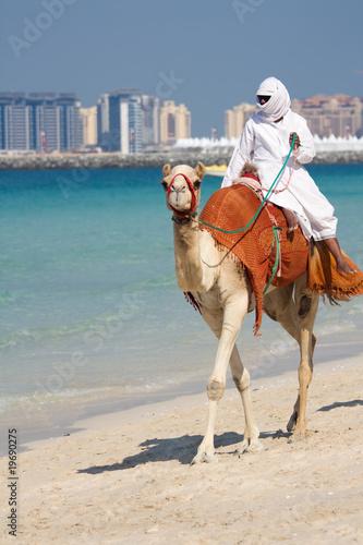 Foto Spatwand Dubai Camel on Jumeirah Beach, Dubai