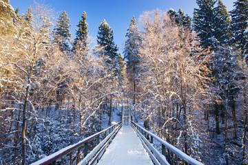Fir-tree under a snow. Symmetric composition.