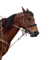 Close up of a Cowboy's Pony Showing the Tack