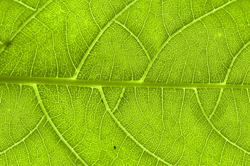 extreme close up of green leaf veins
