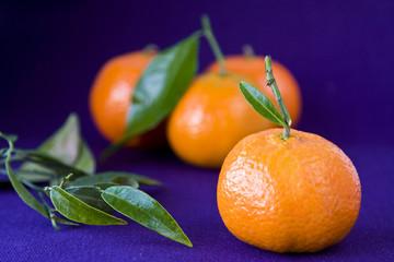 Orangen mit Blätter