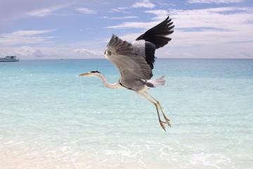 Maldivas, Playa 7