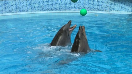 HD Peforming Dolphins playing with green balls, closeup