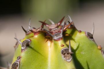 Closeup of a cactus