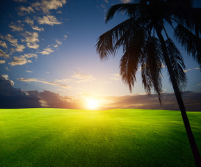 field of grass and palm