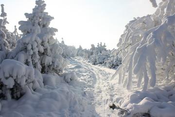 Winterzauber auf  dem Kahleberg im Erzgebirge.
