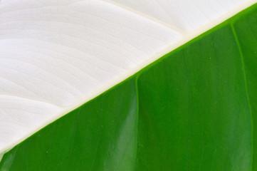 grünweißes Blatt