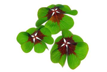 Glücksklee - four leafed clover 27