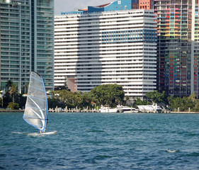 Miami Windsurfer