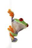 Fototapete Closeup - Kuriosität - Reptilien / Amphibien