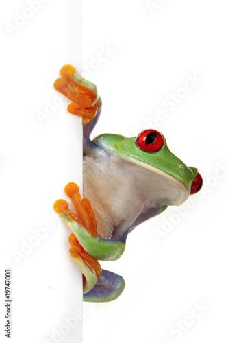Foto op Plexiglas Kikker Crazy Frog!