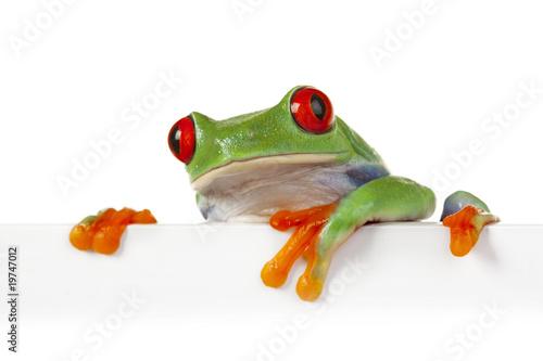 Tuinposter Kikker Crazy Frog!