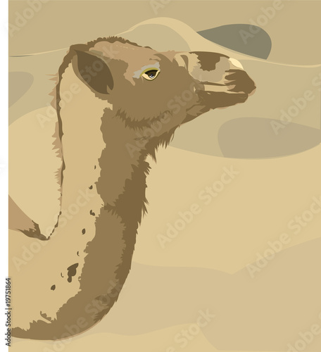 Illustration of A camel looking