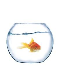 fish in spherical aquarium