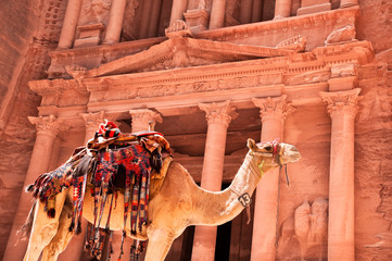 camel against treasury