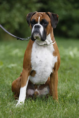Sitting boxer male