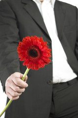man in suit with a gerbera