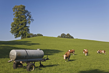 Herbstliche Viehweide am Tegernsee