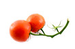 Two tomatoes on a twig