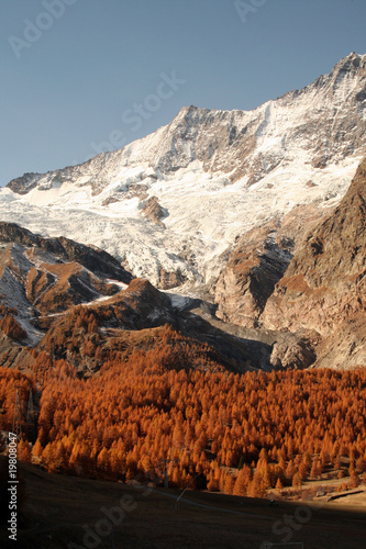 saas fee forest autumn glacier