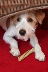 Hund unter Stuhl