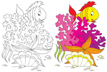 Fish, coral, starfish and shell (bw and color illustrations)