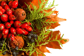 Dry autumn plants and fruits arrangement isolated on white