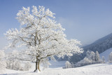 Fototapety grosser baum im winter