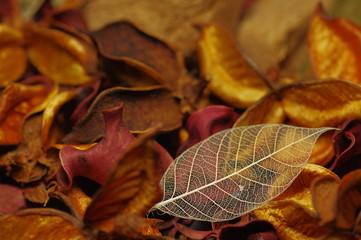 乾いた葉っぱ