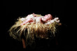 Jesus swaddled in manger