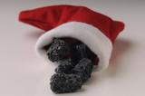 Fototapety Il carbone della Befana