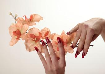Hände mit Orchidee