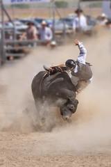 Rodéo, cowboy chevauchant un taureau