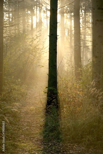 Fotobehang Bos in mist Light of the rising sun hidden behind the coniferous tree