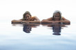 Young and older women in a pool